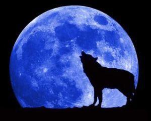 der-wolf-heult-den-mond-an1-776460205, 10, 2021
