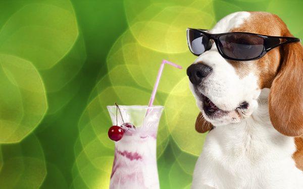 Nicht vergessen: Ein Hund kann nicht schwitzen!