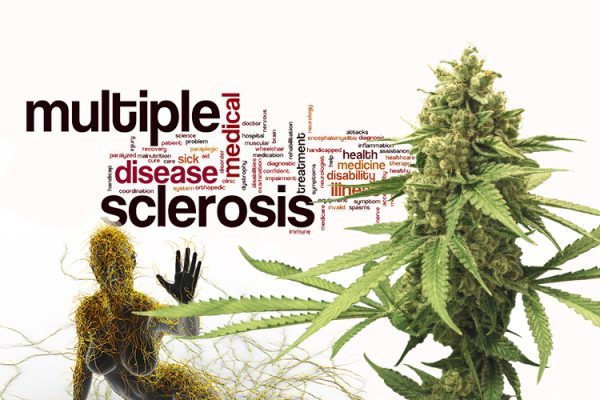 Cannabis als Medizin: Cannabis kann andere Medikamente ersetzen