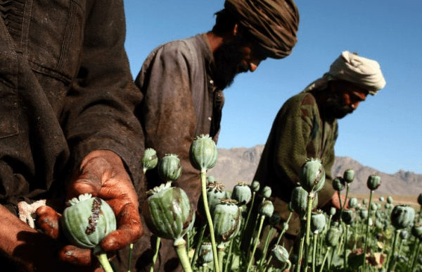 afghanistan-heroin-opiumanbau-e1570034001745-946711605, 10, 2021