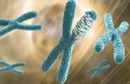 Chromothripsis: Ein katastrophaler Mutationsprozess